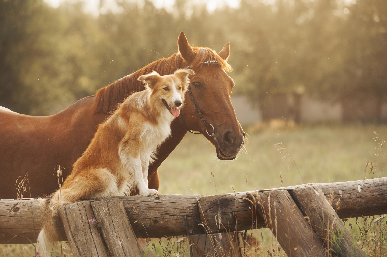 Compagnons et compagnie votre fabricant de soins 100% naturels sans additif pour chiens & chevaux