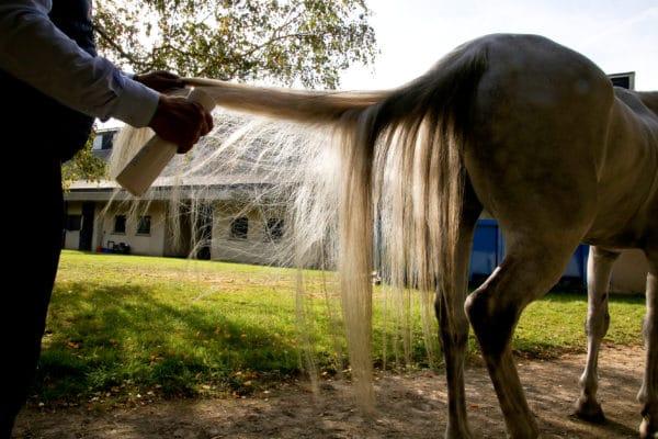 C&cie Démêlant naturel pour chevaux aux huiles essentielles bio sans additif sans effet gras