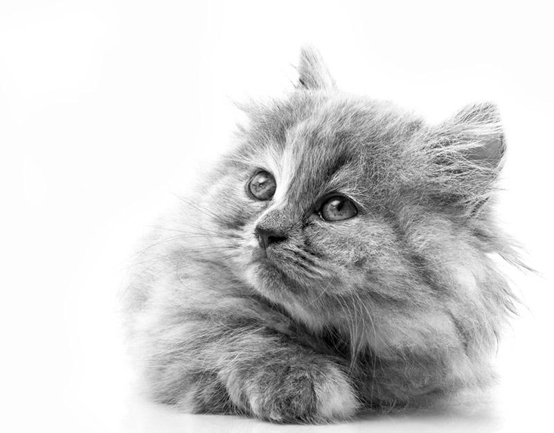 un amour de chat, découvrez notre gamme hydrolathérapie pour chats