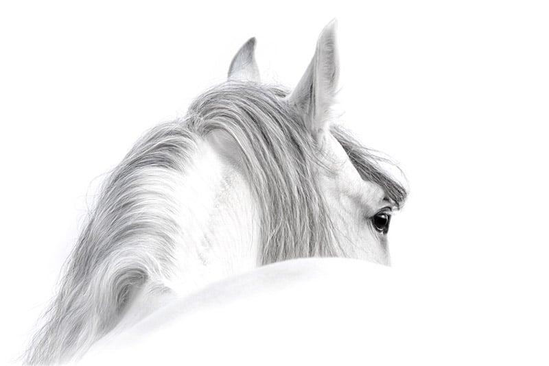 aromathérapie equine