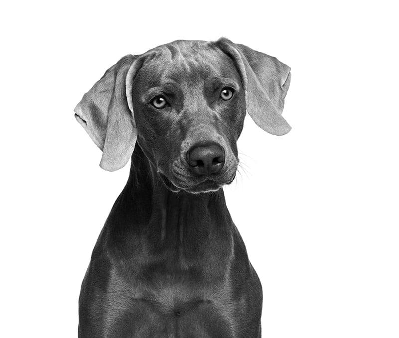 gamme de produit pour chiens