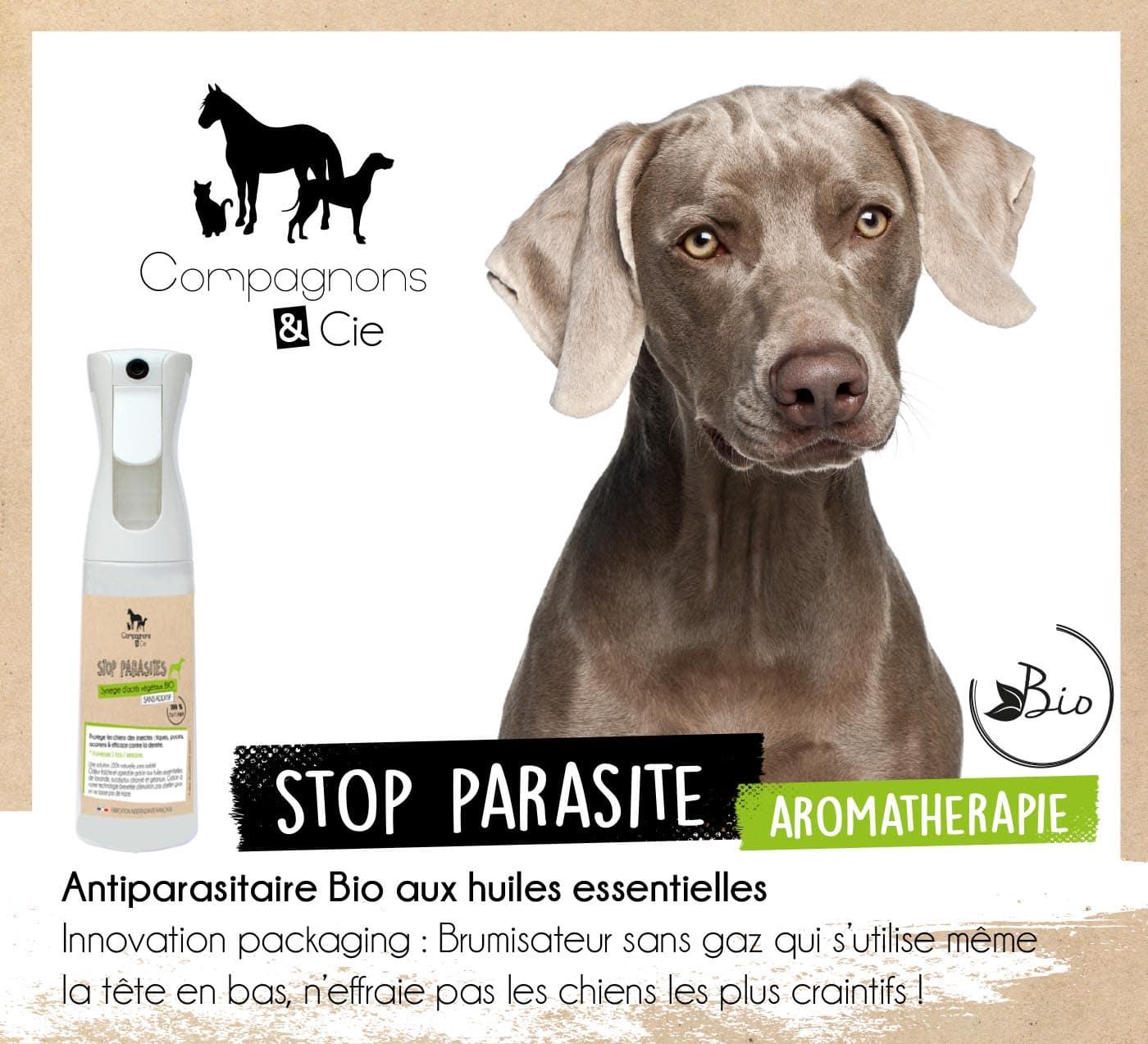 soin chien naturel aromatherapie huiles essentielles bio
