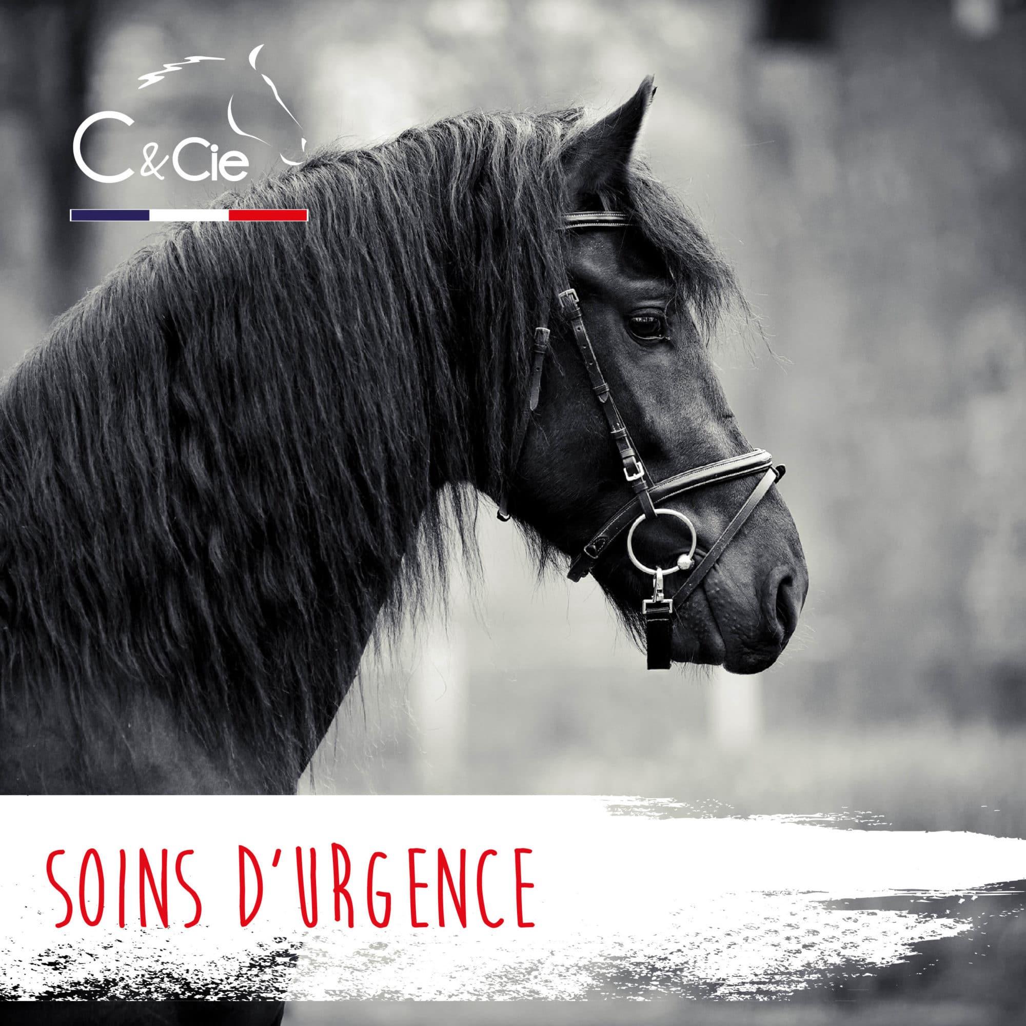 soigner cheval au naturel aromatherapie huile essentielles réparateur cutane blessure