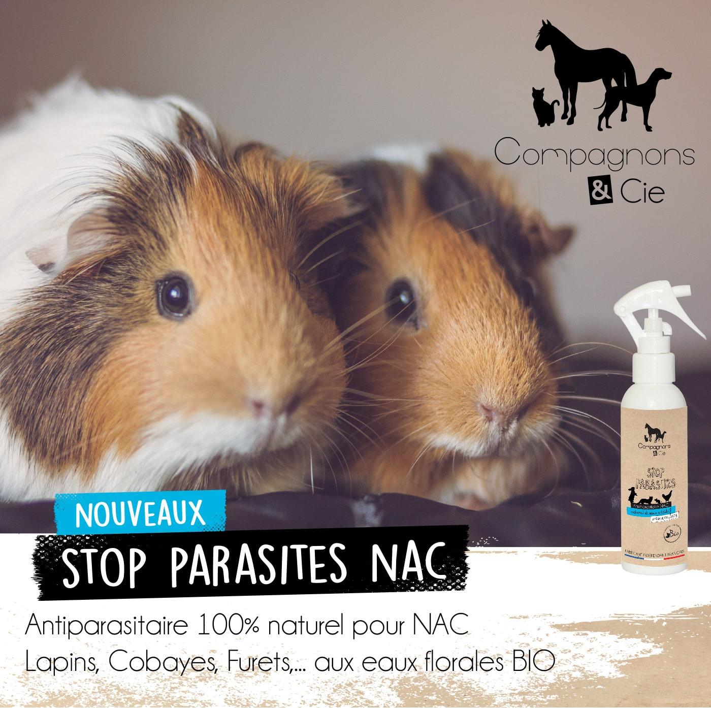 Stop Parasite Nouveaux Animaux de Compagnie